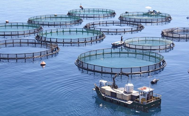 Egypt Fish Farming