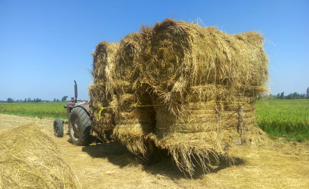 Egypt Announces Nationwide Initiative to Recycle Rice Straw to Reduce Air Pollution