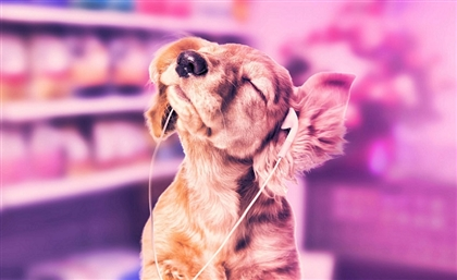 Get Your Pets All Prettied Up at Go Puppy's New Grooming Van