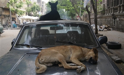 Egyptian MP Wants Stray Dogs Exported to Countries That Consume Dog Meat