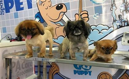 Go Puppy's Grooming Van is Coming to Sahel This Summer