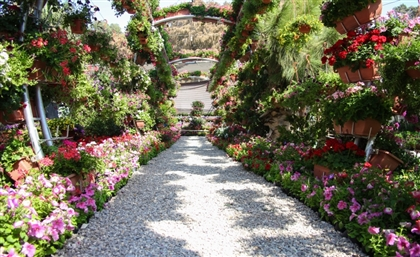The Orman Botanical Garden and the Aquarium Grotto Garden Reopen after Months of Closure
