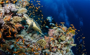 7 Epic Diving Spots in Egypt