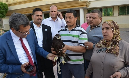 Eagle Found Hiding in Kafr El Sheikh after Being Bullied by Crows, Undergoes Psychological Treatment