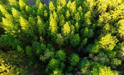 Rotary Club Heliopolis Is Planting 1 Million Trees Around Egypt By Next April