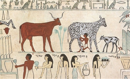 'World's Oldest Cheese' Discovered in Ancient Egyptian Tomb