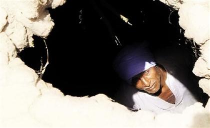 Luxor and Aswan Under Siege as Termites Plague Upper Egypt