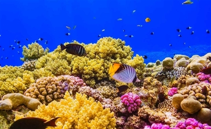 Egypt's Red Sea Coral Reefs are in Serious Danger