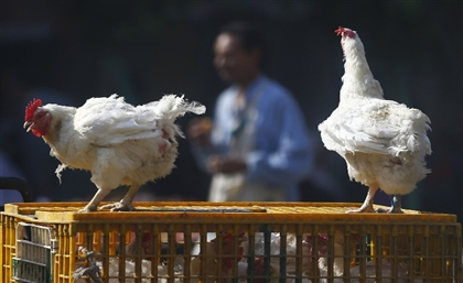 Egypt Bans Trade of Live Poultry in Cairo