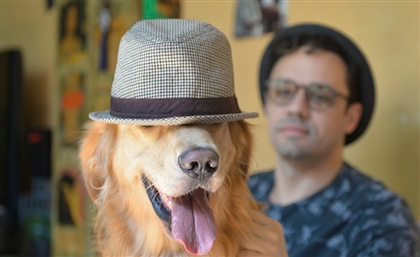 Wigglz: The Egyptian App Every Pet Owner Should Have
