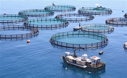 Egypt Ranks First in Africa in Fish Farming