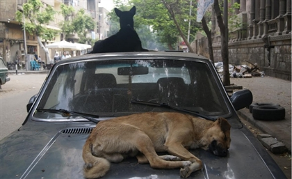 Egyptian MP Calls for Specialised Disposal Sites for Dead Animals