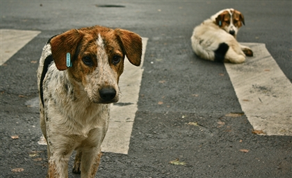 Egypt to Export 4000 Cats and Dogs for the First Time