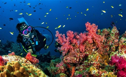 Egypt's Red Sea Named Third Best Diving Destination in the World in DIVE Travel Awards