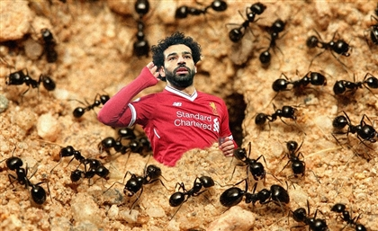 Mo Salah Has New Species of Ant Named After Him
