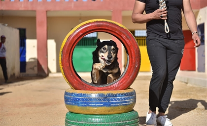 Unleashed: The Shelter Rehabilitating and Training Egypt's Abused and Stray Dogs