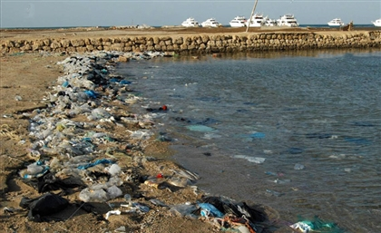 Ministry of Environment Removes 14 Tons of Waste from Red Sea Port