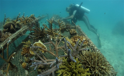 Egypt to Create Two Artificial Coral Reefs by Sinking Old Equipment