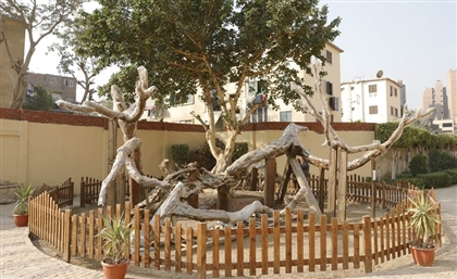 Cairo's Tree of the Virgin to be Redeveloped in October