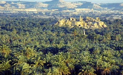 Egypt to Develop Siwa Oasis Natural Reserve