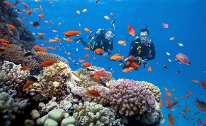 Diving Activities to Resume in South Sinai this December