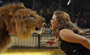 Video: Lion Attacks Handler in Egypt Circus