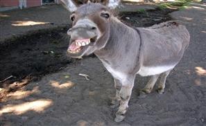 Video: Donkey Slips Security, Roams Around Cairo Airport
