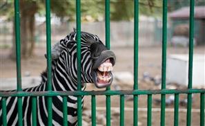 Panic! At the Zoo