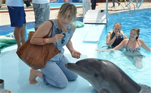 What Ever Happened to Magic Land's Dolphins?