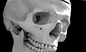 Cairo Police 'Gifted' With Human Skull