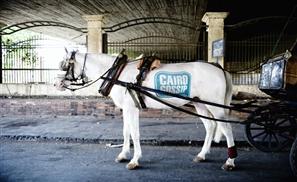 CairoGossip: Animal Advertising