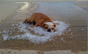 7 Things We Hate About Summer