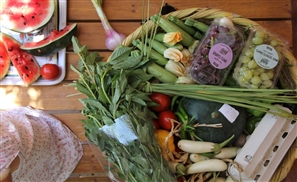 9 Places to Get Locally-Grown Organic Foods in Egypt