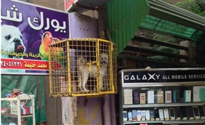 Caged: The Horrific Reality of Pet Shops in Egypt