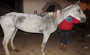 Egypt: Where Donations Can Lead to Further Animal Abuse