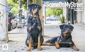 Scene on My Street Competition: Win a New Lumia 530