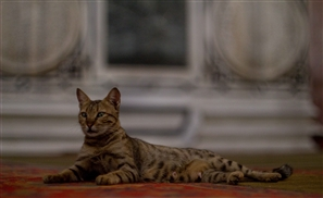 The History of Cats In Cairo Part II: Cats In Islam
