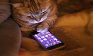 Uberify Your Pet's Next Checkup With Vetwork