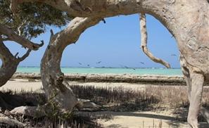 Explore The Gorgeous Red Sea With Roaga