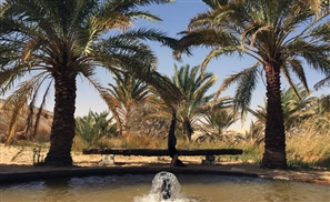 It's Time to Eat Sweet Dates While Exploring the Beautiful Siwa Oasis