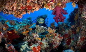 12 of the World's 100 Best Diving Sites Are in Egypt