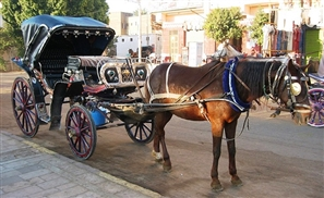 The Uber of 7antoors: You Can Now Order a Horse Carriage in Luxor with a Mobile App
