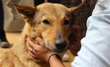 How You Can Help Egypt's Largest Animal Shelter Save 1300 Dogs and Cats From Becoming Homeless