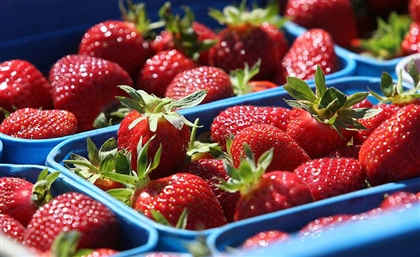 In an Epic Turn-Around, Egyptian Strawberries Deemed the 'Queen of Berries' in the Gulf
