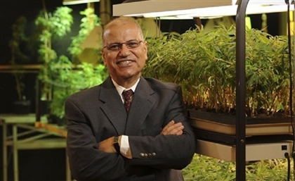 Video: This Egyptian Professor Is the US Government's Only Provider of Marijuana