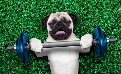 Eastwind Just Opened a New Dog Gym For Exercise and Doggy Networking