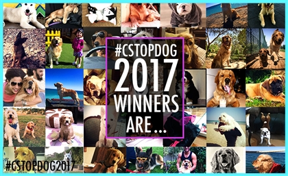 Is your Furry Buddy One Of Our #CSTopDog2017 Winners?