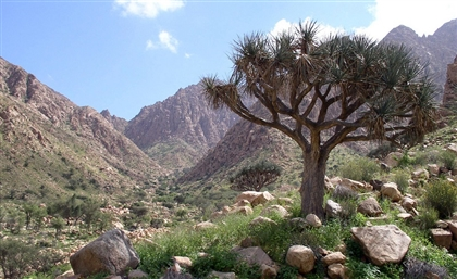 9 of Egypt's Most Beautiful Nature Reserves