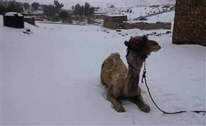 12 Things That Happen Every Winter in Egypt