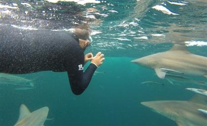 Shark PR: Meet The Egyptian Man Changing Our Perceptions